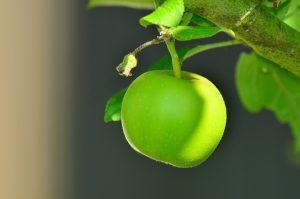 Nach einem englischen Sprichwort kann ein Apfel am Tag auch den Doktor fernhalten.