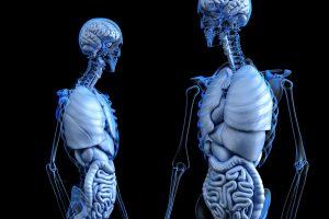 Bei der Körperanalyse untersucht man die Zusammensetzung des Körpergewichtes bezogen auf Knochen, Muskeln, Fett und Wasser.