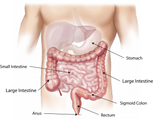 Funktioniert der Darm nicht mehr richtig kann eine Darmreinigung helfen.