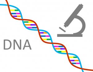 Die DNA-Diät wird durch DNA-Test und Smartphone-App begleitet.