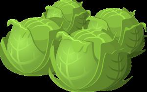 Die Kohlsuppendiät gilt als deutscher Ditäklassiker. Weißkohl heißt auf Englisch Cabbage.