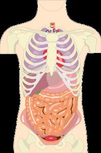 Bei einem Magen-Bypass wird der Dünndarm verkürzt und das Magenvolumen verkleinert.