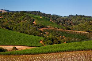 Die Sonoma-Diät hat ihren Namen von dem kalifornischen Weinanbaugebiet.