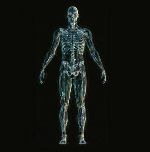 Die Gelenke werden durch Übergewicht, aber auch durch Sport belastet.
