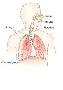 Durch die Umwandlung von Fettsäuren in Kohlendioxid atmet man viele der vorhanden Fettdepots aus.
