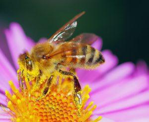 Positive Eigenschaften von Blütenpollen