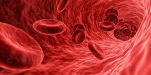 """Blut, auf Englisch """"blood"""" hat im Körper eine wichtige Transportfunktion zu den Körperzellen."""