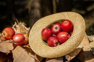 Sekundäre Pflanzenstoffe wie die Polyphenole kommen beispielsweise in Äpfeln und vor allem in deren Schale vor.