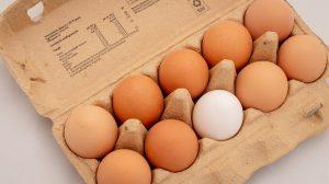 Erzeugercode auf Eiern ablesen, er verrät woher das Ei stammt und wie das Huhn gehalten wurde.