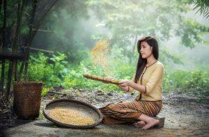 Abnehmen mit der Reis-Diät, wie genau funktioniert sie?