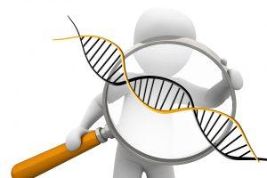 Individuell abnehmen mit der Gen-Diät