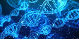 Bei der Gen-Diät richtet sich die Diät individuell nach dem Meta-Typ aus.