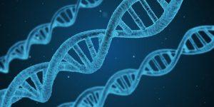 Gene bestimmen was man essen kann
